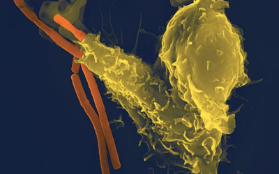 Comment dorloter son système immunitaire